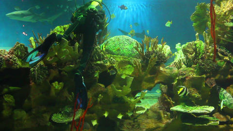diver in oceanarium Footage