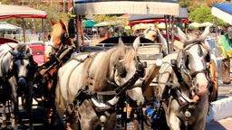 CART HORSES Stock Video Footage