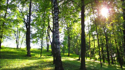 sun in summer woods Footage