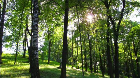 sun in summer woods Stock Video Footage