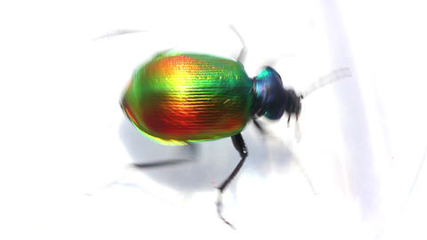 large green beetle running macro Footage