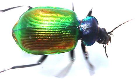 large green beetle running macro - slow motion Stock Video Footage