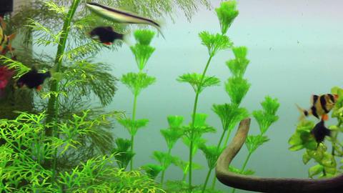 fish swimming in aquarium Stock Video Footage