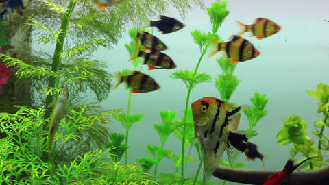 fish swimming in aquarium Stock Video Footage