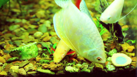 feeding the fish in aquarium Stock Video Footage