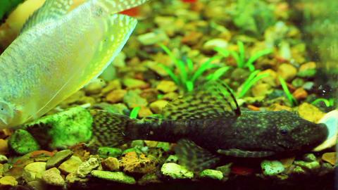 feeding the fish in aquarium Stock Video Footage