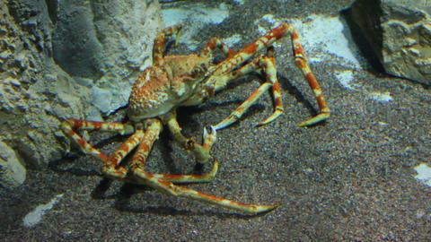 large crab underwater Stock Video Footage