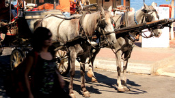 CART HORSES Footage