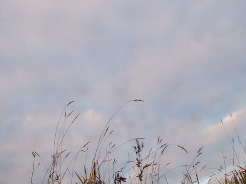 Overcast on the grass. Sunset. Time Lapse. 4x3 Stock Video Footage