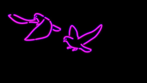 neon bird Stock Video Footage