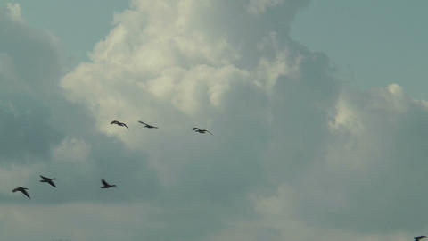 flock of geese flying on cloudy sky Stock Video Footage