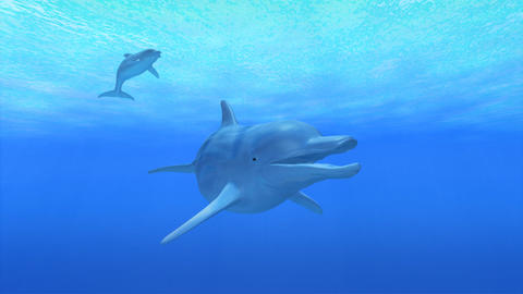 Dolphin Sea F HD Stock Video Footage