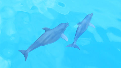 Dolphin Sea T HD Animation