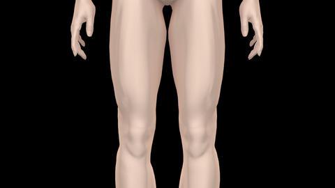 Medical Body MsF HD Animation