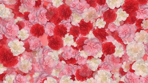 Flower 3 M1S HD Stock Video Footage