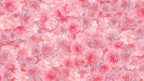 Flower 3 P1S HD Stock Video Footage