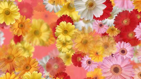 Flower 4 G2L HD Stock Video Footage