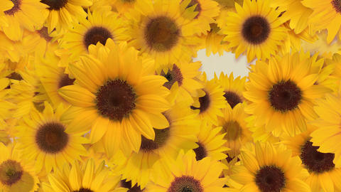 Flower 4 S1L HD 動画素材, ムービー映像素材