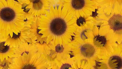 Flower 4 S1L HD Stock Video Footage