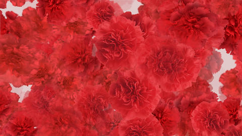 Flower 3 R1L HD Stock Video Footage