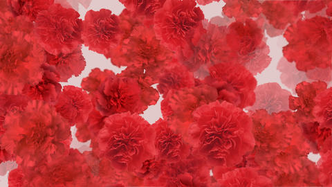 Flower 3 R2L HD Stock Video Footage