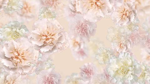 Flower 3 W1L HD Stock Video Footage