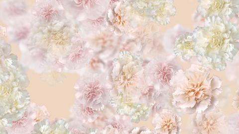 Flower 3 W2L HD Stock Video Footage