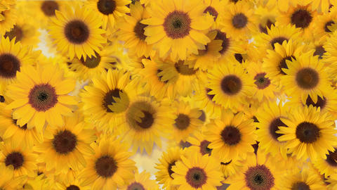 Flower 4 S2L HD Stock Video Footage