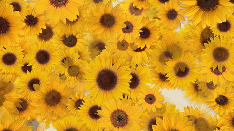 Flower 4 S2L HD CG動画素材