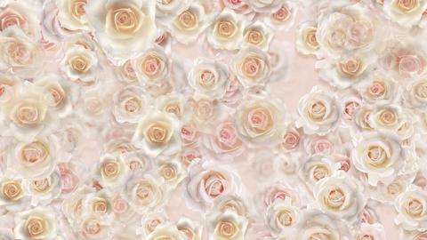Flower 2 W1S HD Stock Video Footage