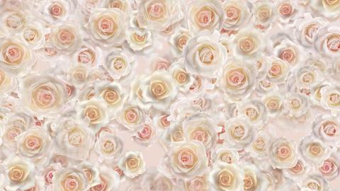 flower 2 W2S HD Stock Video Footage