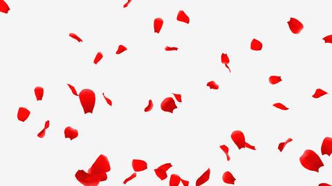 Rose Petals A1 Stock Video Footage