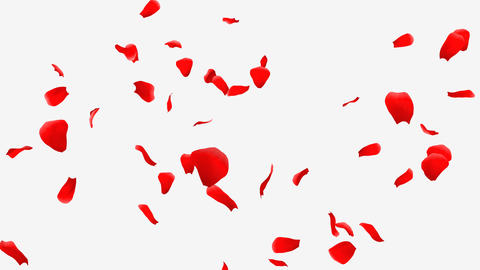 Rose Petals A1 Animation