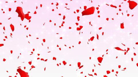 Rose Petals C1 Stock Video Footage