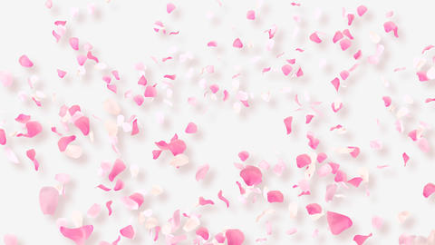 Rose Petals B2 Stock Video Footage