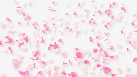 Rose Petals B2 Stock Video Footage