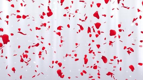 Rose Petals D1 Stock Video Footage