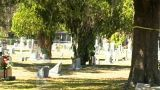 Female Ghost In A Cemetery (2) stock footage