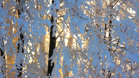 winter frozen birch woods and sun rising Stock Video Footage