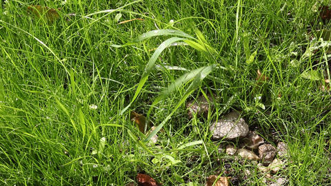 Wet stones on the green grass Stock Video Footage