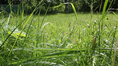 A lawn of grass Stock Video Footage