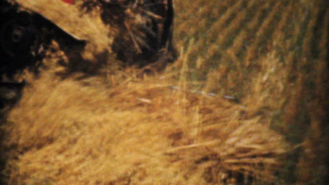 Farmers Harvesting Golden Wheat 1940 Vintage 8mm Stock Video Footage