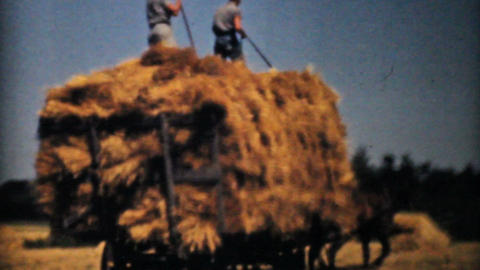 Farmers Harvesting Golden Wheat 1940 Vintage 8mm Footage