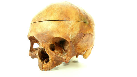 Human skull isolated on white background Footage