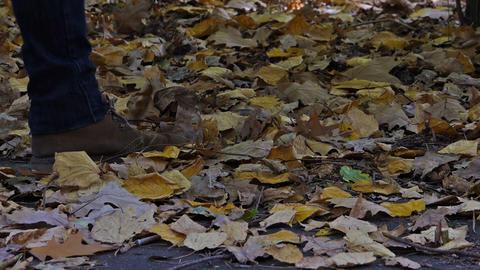 Walk on the leaves Footage