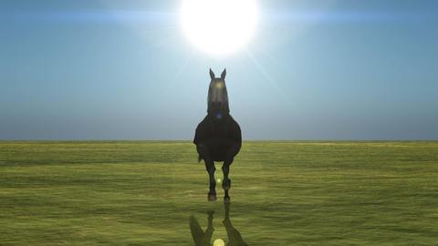 馬 stock footage