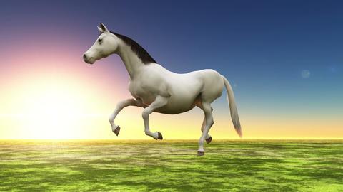 馬 Animation