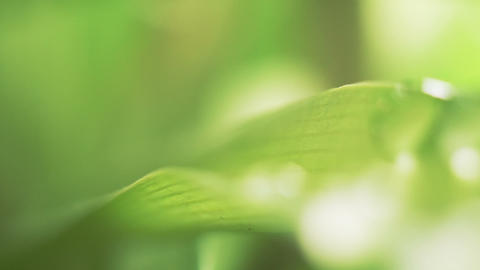 wet grass and flower after rain extremely close-up Stock Video Footage