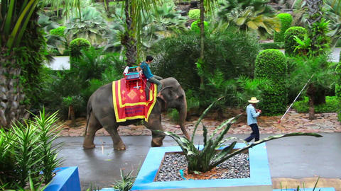 tourist on elephant in famous Nong Nooch tropical Stock Video Footage