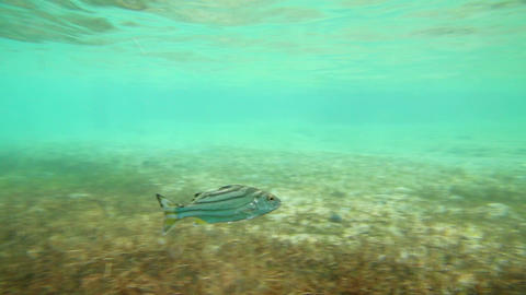 Tropical fish swimming Stock Video Footage